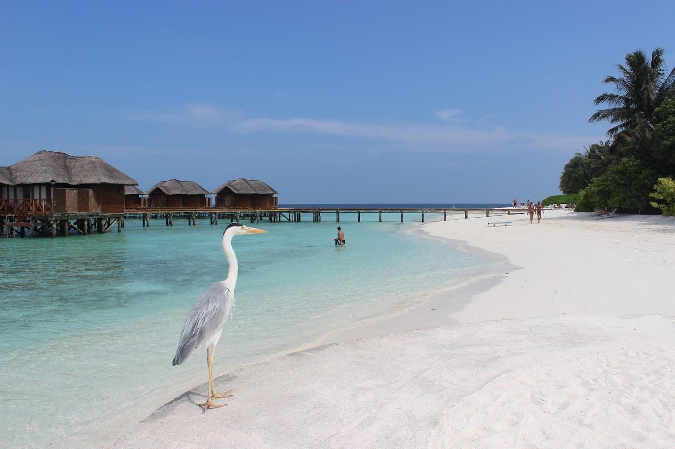 Новы год на Мальдивах!Лучшие цены, прекрасные отели и комфортный перелет рейсами Аэрофлот!